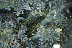 Gąsienicy determinują zostać pięknym motylem Zdjęcie Stock