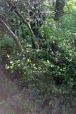 Gąsienicy sieć Fotografia Royalty Free