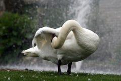 Gąska pokazuje elastyczność swój szyja Zdjęcie Royalty Free