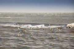 Gąski lata przez ocean Zdjęcia Stock