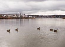 Gąski Zbliżają rafinerię ropy naftowej na Missouri rzece Fotografia Stock