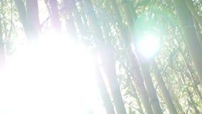 Gąszcze zielony bambus przeciw zbiory