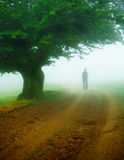 gęsta mgła. Obrazy Royalty Free