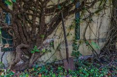 gęste rośliny i łopata zdjęcie royalty free