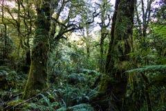 Gęsto zakrywająca dżungli podłoga zdjęcia royalty free