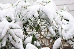 Gęsty śnieg obraz royalty free