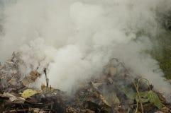 Gęsty dym Uwalnia od stosu liście zdjęcie stock
