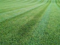 Gęsty dywan szmaragdowa zielona trawa kosząca w liniach obrazy royalty free