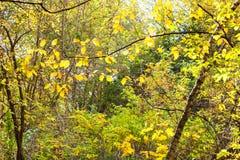 gęsty las iluminujący słońcem w Października dniu zdjęcia stock