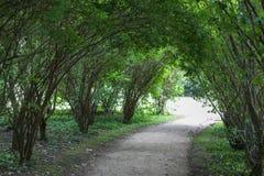 Gęsty las w fuerst pueckler parku w złym muskau zdjęcie stock