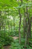 Gęsty las w fuerst pueckler parku w złym muskau zdjęcie royalty free