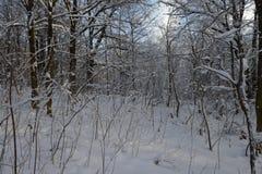 Gęsty las z śnieżnymi drzewami zdjęcia royalty free