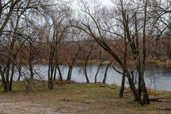 Gęsty mokry drzewny bagażnik, las lub park blisko jeziora, dobrego dla tła fotografia royalty free
