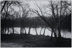 Gęsty mokry drzewny bagażnik, las lub park blisko jeziora, monochromatyczny tło zdjęcia royalty free