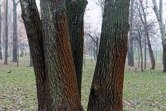 Gęsty mokry drzewny bagażnik z mech, zbliżenia tło obraz stock