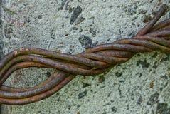 Gęsty ośniedziały drut na szarej betonowej kolumnie fotografia stock