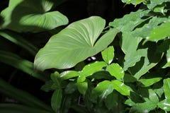 Gęsty roślina liść zdjęcie stock