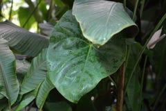 Gęsty roślina liść obraz stock