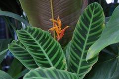 Gęsty roślina liść zdjęcie royalty free