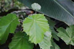 Gęsty roślina liść fotografia stock