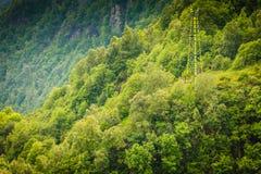 Gęsty zielony las i wysoki wierza fotografia stock