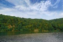 Gęsty, zielony las na skalistym brzeg rzeki, obrazy stock