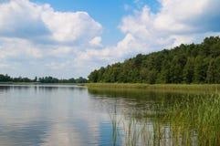 Gęsty zielony las z jeziorem od above Cudowny letni dzień Polska zdjęcia royalty free