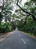 Główna droga między lasową ciemniutką ścieżką fotografia stock