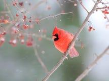 główny męski śnieżyca Obrazy Royalty Free