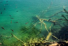 Główny naturalny punkt zwrotny Chorwacja jest Plitvice jeziorami z kaskadami siklawy Szmaragd jasna zimna woda na tle obraz stock