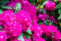 Główny widok kwiaty, Wiesbaden, Niemcy fotografia royalty free
