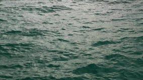 głębii śródpolne macro przesmyka nawierzchniowej wody fala zbiory