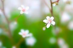 głębii pola kwiatu macro Zdjęcia Stock