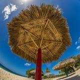 głębii pola płycizna strzelał pionowo słońce parasol bardzo Zdjęcie Stock