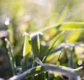 głębii rosy pola trawy przesmyk Zdjęcie Stock