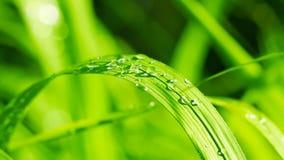 głębii rosy pola trawy przesmyk