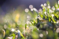 głębii rosy pola trawy przesmyk Obrazy Royalty Free