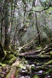 Głębocy lasy, Tasmania Obrazy Royalty Free