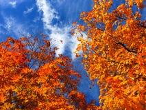 Głębocy pomarańczowi drzewa zdjęcie stock