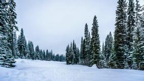Głęboka śnieg paczka w lesie obraz royalty free