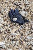 Głęboka błękitna zimy przędzy rękawiczka zakłada niszczy na plaży zdjęcia stock