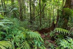 Głęboka dżungla w Ko Kood wyspie Zdjęcia Stock