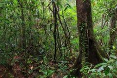 Głęboka dżungla w Ko Mook wyspie Fotografia Stock