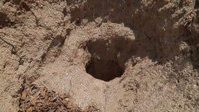 Głęboka dziura w ziemi w dżungli Kopalnia, ekstrakcja łyszczyk India, Azja zbiory wideo