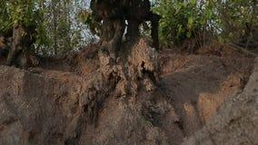 Głęboka dziura w ziemi w dżungli Kopalnia, ekstrakcja łyszczyk India, Azja zdjęcie wideo