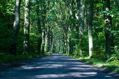 głęboka lasowa droga Zdjęcia Stock