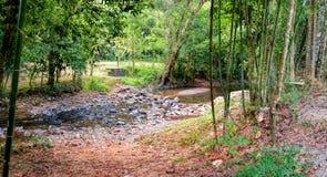 głęboka lasowa halna rzeka Zdjęcia Stock