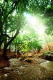 głęboka lasowa rzeka Obraz Royalty Free