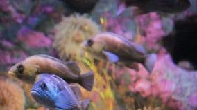 Głęboka woda zbiornik z jaskrawą ryba i nadwodnym życiem zdjęcie wideo