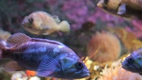 Głęboka woda zbiornik z jaskrawą ryba i nadwodnym życiem zbiory wideo